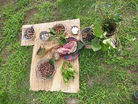 縄文時代の人が食べていた食べ物を山からさがしてきました! 栗やドングリは大切な食糧です。