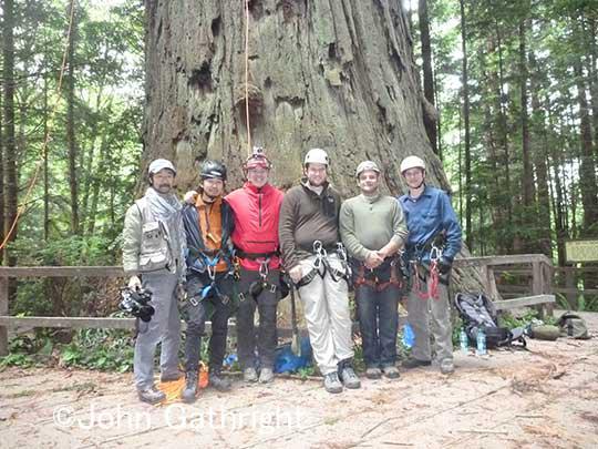 コーストレッドウッドの森を撮影したチーム