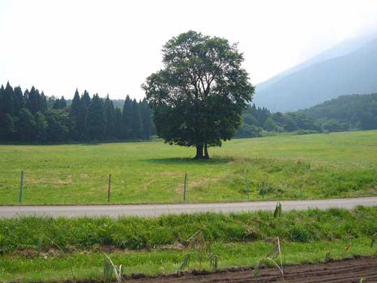 一本の木もまた心に安らぎをくれる・・・