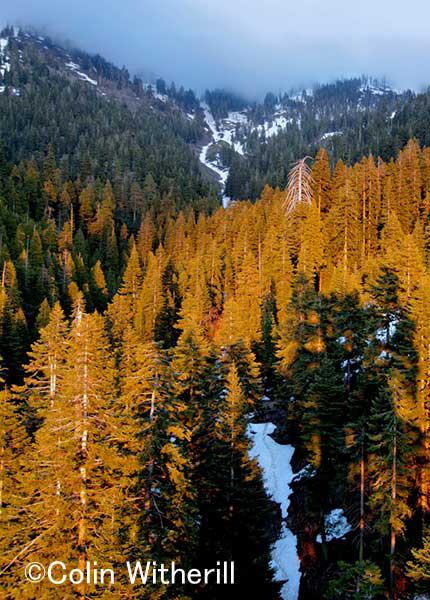 セコイアの森の夕焼け。。。 森が夕日に照らされてそれは言葉にできない美しさだった。 黒い所は僕が立っているセコイアの影。
