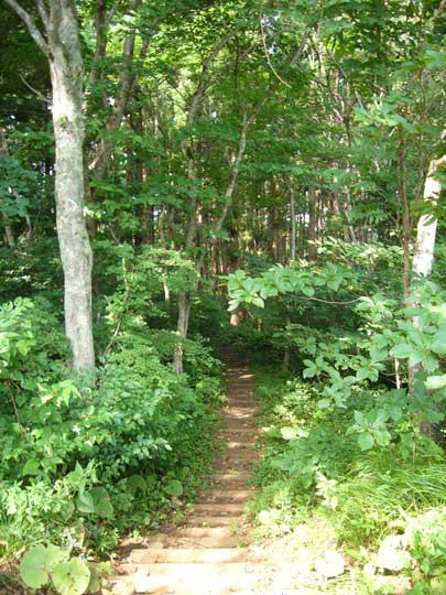 ここの坂道を登ってくると・・・目の前に広がったのは