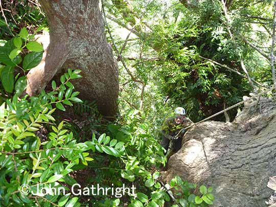 登ってくるウエンデル、樹上が丸でジャングルだ!