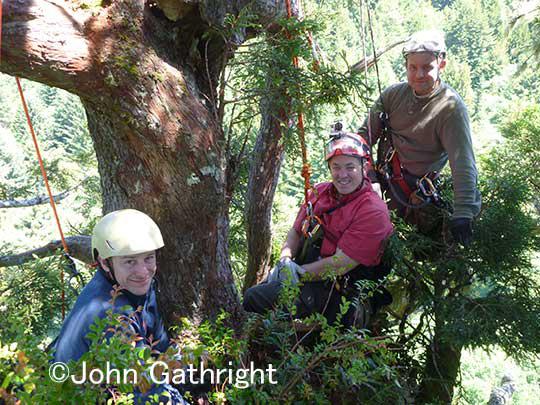 樹上80mコーストレッドウッドの世界。 パラダイスで一息つくクリントン、ジョン、そしてウエンデル。彼らは研究者達。